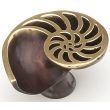 Schaub<br />980R-PB/BZ - Solid Brass, Symphony, Neptune Designs, Knob, Shell, Right, Polished Brass, Dark Bronze, 1-1/2